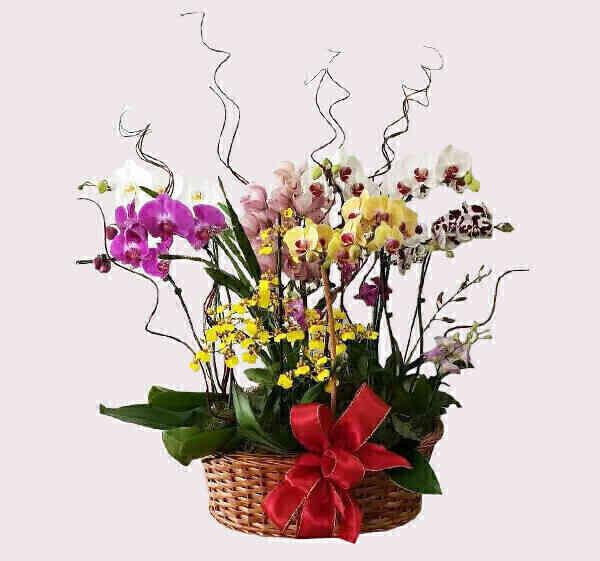 Cestão de orquídeas..