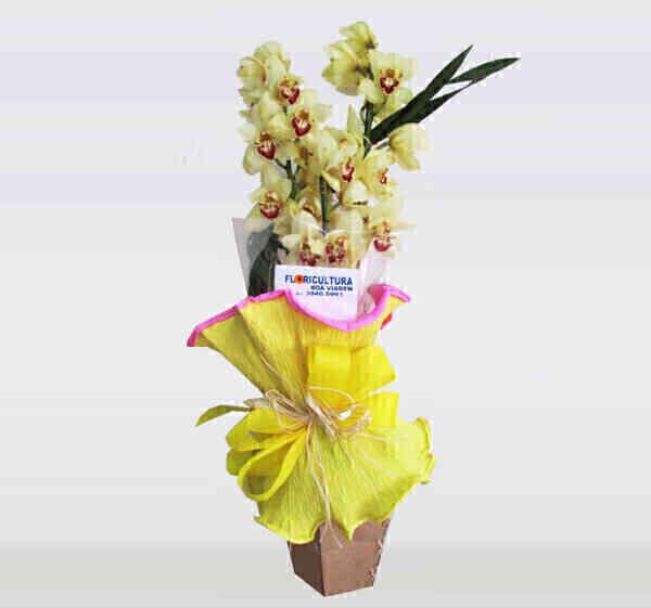Orquídea Cimbidium 2..