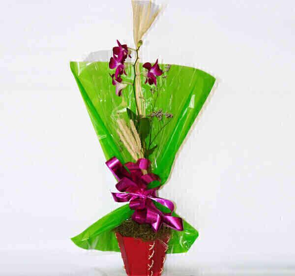 Orquídea Denphal papel ve..