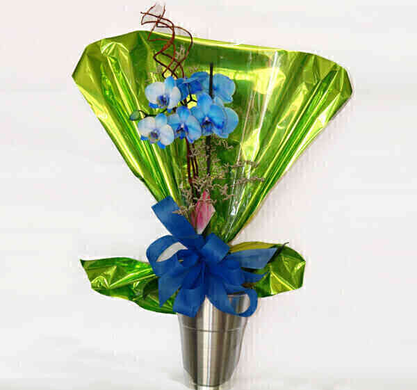 Vaso de orquídea phalaeno..