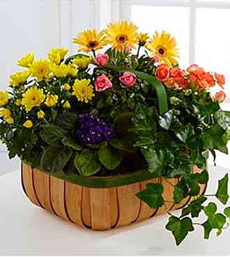 7S364524DO-Gentle Blossom..