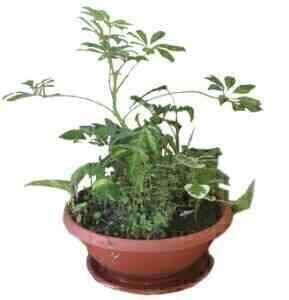 ARRANGEMENT OF PLANTS..