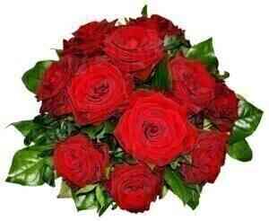TANTALIZING 12 ROSES..