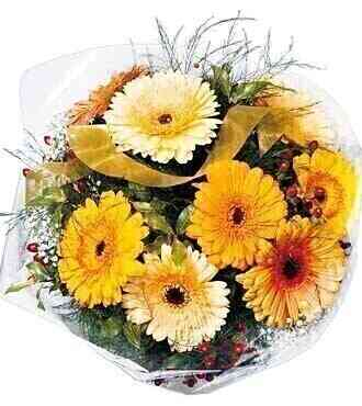 Mixed Gerbera Bunch..