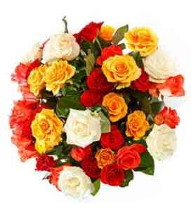 7AT64779AT-12 rosas com e..