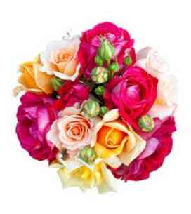 7AT64826AT-Sonho de rosas..