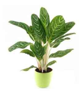 7AT64878AT-Planta verde..