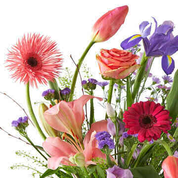Sweet-Spring..