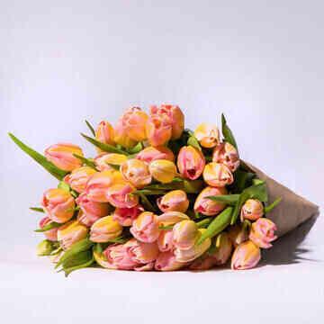 Tulpen-Tom-Pouce-50-Stiel..