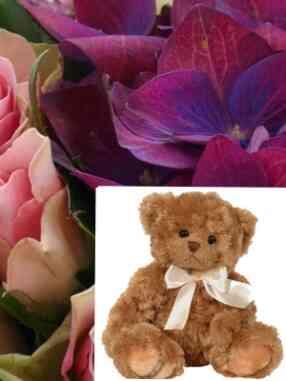 BSCF-Teddy..